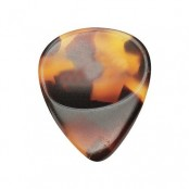 Dugain plectrum Shell